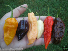 BHUT JOLOKIA PEPPER SEED **ULTIMATE** COLLECTION (Red,purple,white,and more!!)