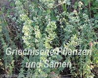 🔥🌿 echter griechischer Oregano 100 frische Samen * mehrjährig Kräuter Balkon