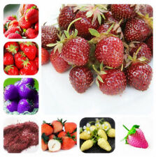 100 pcs Rare Color Strawberry Tree Seed Bonsai Heirloom Tasty Succulent Fruit