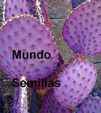 TUNERA VIOLETA   nopal Opuntia (frutos comestibles) 5 semillas seeds