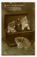 c 1914 Fluffy Kitten Bright and Happy BIRTHDAY CAT QUARTET photo postcard