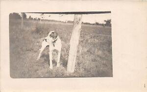 D81/ Dog Pet Animal RPPC Postcard c1910 Dog Fence Post Real Photo 3