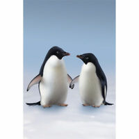 Monty & Mabel Large Wall Mural John Lewis wallpaper Picture Penguins