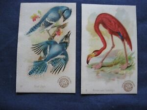 Victorian Trade Card Arm& Hammer #41 Blue Bird #8 American Flamingo Birds 80