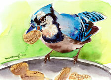 ACEO Limited Edition- Blue jay eating a peanut, Bird Art print, Gift for her