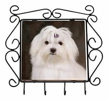 AD-M1yJB Maltese Dog /'Yours Forever/' Keepsake//Jewellery Box Christmas Gift