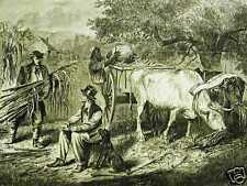 GATHERING CORN OXEN FARMING 1867 Antique Print Matted