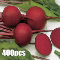 400Pcs/Pack Beetroot Seeds Detroit Seeds Vegetable Organic Original Seeds Plant