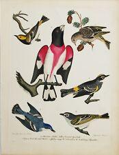 "ORIGINAL Hand Colored Engraving  ""American Ornithology"" Alexander Wilson"
