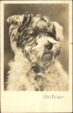Close-up of Dog - Terrier Breed Austrian Real Photo Postcard