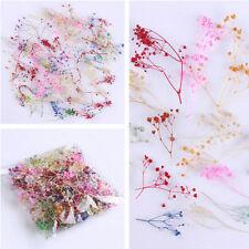 10PCS 3D Babysbreath Real Dried Flower Decoration DIY For UV Gel Nail Art Tips