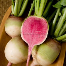 400 Watermelon Red Radish Seeds Cute,Delicious Salad Or Fruit Radish TT128