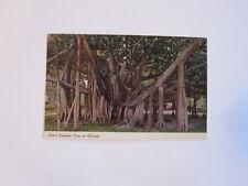 GIANT BANYAN TREE FLORIDA 1967  POSTCARD