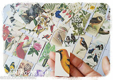 32 Vintage Bird,Flower paper ephemera,scrapbook ephemera art,Snail mail,Card