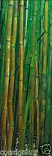 Peter Lik framed (33 X 20) Bamboo Forest - signed and numbered 134/950