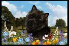 Summer Floor Mat - Black Cairn Terrier 39328