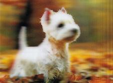 3 -D - Ansichtskarte: kleiner Hund passt gut auf: White Terrier