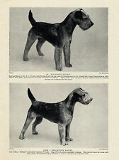 LAKELAND TERRIER DOGS OLD ORIGINAL DOG PRINT FROM 1934