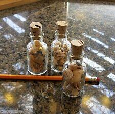 Vintage Glass Shell Bottles 3 Small Lab Bottles Sea Shells Jars Seashell Cork