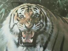 ~ raros ~ edición limitada de David Pastor Impresión Tigre Fuego 842/850 emitidas en 1973