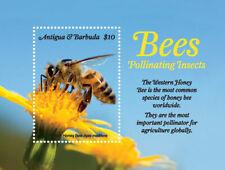 Antigua and Barbuda 2018 fauna bees pollinating insects I201901