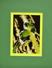 GREEN LANTERN & The ATOM PRINT PROFESSIONALLY MATTED Alex Ross