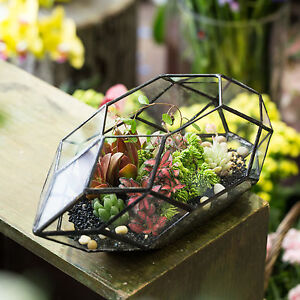 Box Jewellery Geometric Glass Terrarium Plant Planter Flower Pot Christmas Gift