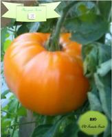 "Bio-Saatgut, alte Tomaten-Samen, Fleischtomate ""Scharon"", ""Hurma"""