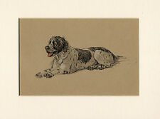 ENGLISH SETTER LOVELY IMAGE OLD 1930'S CECIL ALDIN DOG ART PRINT READY MOUNTED