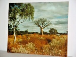 'In Kimberley Country' by B Edwards Original Photo Mounted on Card Wildflowers