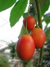 Fruit Seeds
