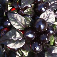 10 Semi/Seeds DI PEPERONCINO PICCANTE  BLACK PEARL HOT