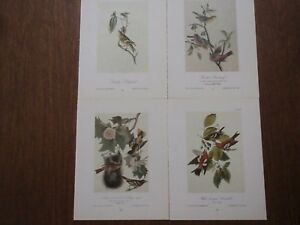 Lot of 40 Audubon Bird Prints - Goldfinch Tanager Oriole Finch Jays Vireo - 3