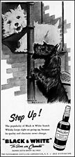 1955 Scottish terriers Black & White scotch whisky vintage art print ad ads44