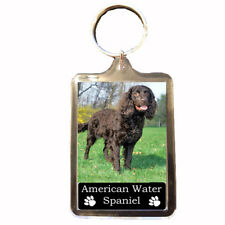 American Water Spaniel - Collectable Dog  Keyring (Gift)