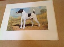 Smooth-Haired Fox Terrier Dog By Edwin Megargee Large Vintage Print 1940s