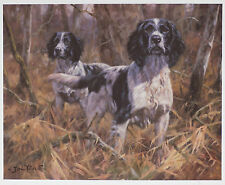 ENGLISH SPRINGER SPANIEL BLACK & WHITE WORKING GUN DOG ART LIMITED EDITION PRINT