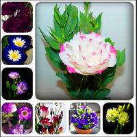 100 PCS Seeds Eustoma Perennial Bonsai Flowers Plants Home Garden Free Shipping