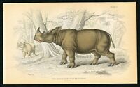 1835 Two Horned Sumatran Rhinoceros, Hand-Colored Antique Zoology Print