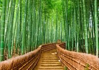 A3| Awesome Bamboo Forest Poster Size A3 Tropical Japan Poster Gift #14168
