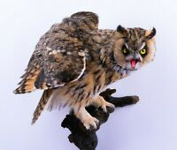 Taxidermy Owl Bird of prey Real Stuffed mounted