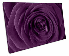 LARGE PURPLE ROSE CANVAS WALL ART PICTURE LARGE 75 X 50 CM