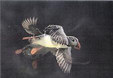 Lentikular - Wackelkarte: Papageientaucher im Anflug - Flying puffin
