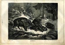 Wildschwein -- Die Wildschweine  -  Holzstich - aus 1868