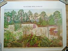 More details for vintage 1977 scottish pine forest british museum natural history wall chart