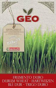 GEO Organic Wheatgrass Seeds (5Kg Sack)