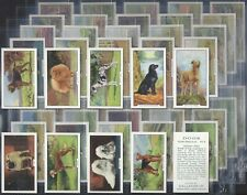 GALLAHER-FULL SET- DOGS (2ND SERIES 48 CARDS) - EXC+++