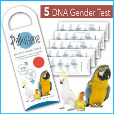 5 Bird DNA Gender Tests for Parrots, Lovebirds & Cockatoos Psittacidae BREEDERS