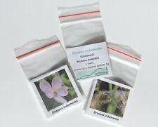 Drosera indumenta_Pink Flower sundew_carnivorous plant_endemic WA_5 fresh seeds