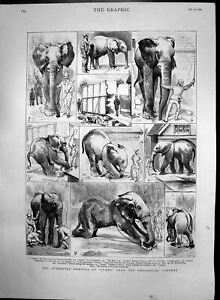Antique Old Print Attempted Removal Jumbo Elephant Zoological Gardens 1882 19th